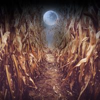 Children of the Corn Maze | Off the Grid Event