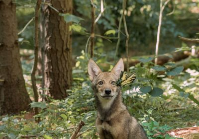 OMNIMAX film: Backyard Wilderness
