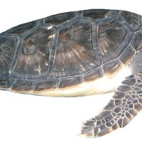 Chippie's Sensational Science Labs: Sea Turtles and Oceans