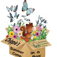 Chippie's Summer Camp in a Box: Museum Mysteries